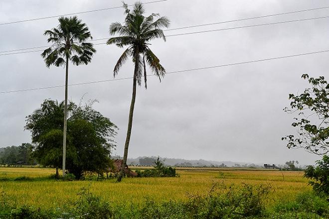 A Ricefield in San Julian, Tabuk Kalinga